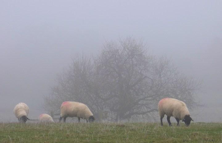 Foggy days and frosty days